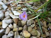 Stein, Blumen, Frühling, Fotografie