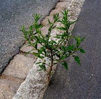 Straße, Pflanzen, Asphalt, Baum