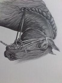 Zeichnungen, Pferde, Friese