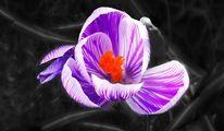 Blumen, Blühen, Pflanzen, Natur