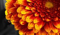 Orange, Blumen, Natur, Fotografie