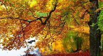 Pflanzen, Herbst, Fotografie, Teich