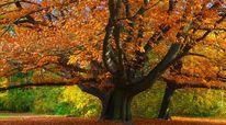 Wald, Herbst, Baum, Park