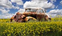 Landschaft, Rost, Wiese, Auto