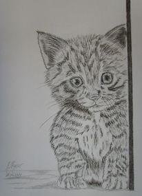 Katzenzeichnung, Zeichnung, Neugier, Katze