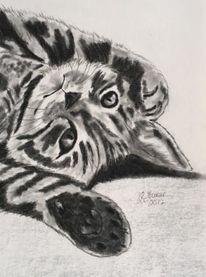 Katze, Katzenportrait, Pastellmalerei, Schwarz weiß