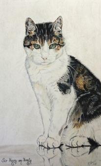 Katzenzeichnung, Kateze, Pastellmalerei, Haarig