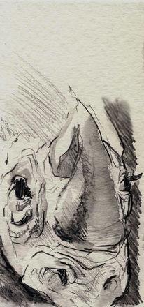 Tiere, Bleistiftzeichnung, Zeichnung, Studie