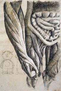 Anatomie, Illustrationen, Architektur mensch