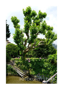Baum, Grün, Garten, Architektur