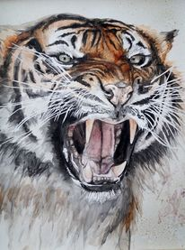 Großkatze, Tiger, Katze, Tiere