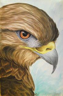 Greifvogel, Vogel, Bussard, Malerei