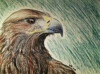 Vogel, Greifvogel, Adler, Zeichnungen