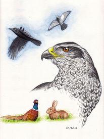 Vogel, Habicht, Greifvogel, Aquarell