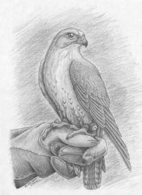Lannerfalke, Vogel, Falke, Greifvogel