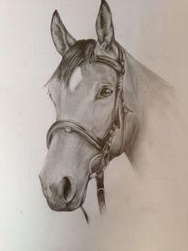 Pferde, Bleistiftzeichnung, Zeichnungen