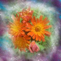 Orange, Verträumt, Romantsich, Blumen