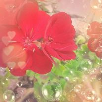 Verträumt, Blase, Rot, Blumen