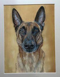 Pastellmalerei, Haustier, Hund, Kopf