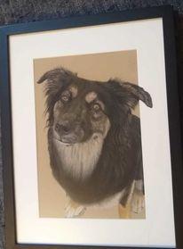 Tiere, Portrait, Hund, Tierportrait