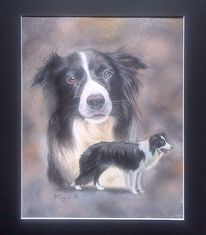 Tiere, Collie, Border collie, Naturalistisch