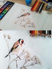 Vogel, Zeichnung, Farben, Wasserfarbe