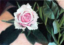 Rose, Rosa, Blatt, Pflanze
