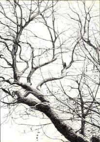 Knorrig, Zeichnung, Baum, Feder
