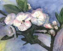 Blüte, Äste, Blätter, Kirsche