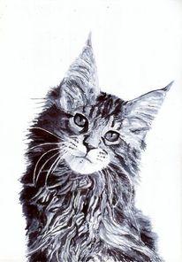 Katze, Main, Fell, Ohr