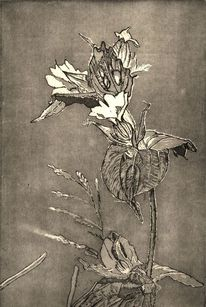 Blüte, Grafik, Pflanzen, Schatten