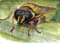 Fliege, Augen, Tiere, Schwebefliege