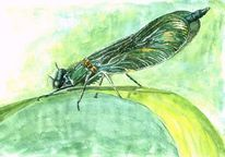 Natur, Insekten, Flügel, Libelle