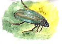 Lebewesen, Natur, Käfer, Kolbenwasserkäfer