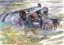 Hippo, Flusspferd, Tiere, Wasser