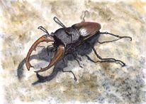 Käfer, Hirschkäfer, Bein, Tiere