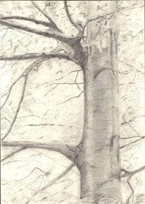 Park, Baum, Rinde, Zeichnung