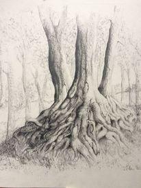 Wurzel, Zeichnung bleistiftzeichnung, Landschaft, Realismus