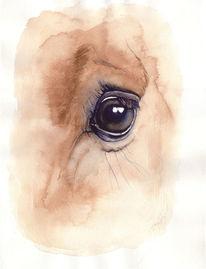 Pferdeportrait, Ausdruck, Pferde, Vollblut