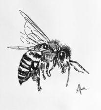 Biene, Insekten, Tuschmalerei, Zeichnungen