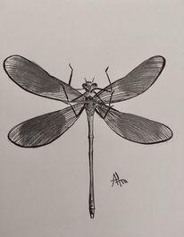 Libelle, Insekten, Bleistiftzeichnung, Zeichnungen