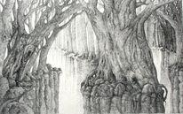 Wald, Wurzel, Licht, Baum