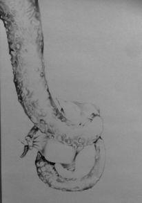 Kissen, Krake, Zeichnungen