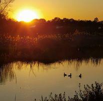 Sonnenuntergang, Teich, Ente, Fotografie