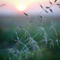 Sonnenaufgang, Gras, Tau, Fotografie