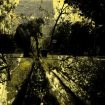 Straße, Zweig, Menschen, Spiegelung