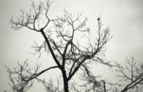 Äste, Träumerei, Baum, Fotografie