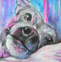 Blau, Tiere, Hundeportrait, Gesicht