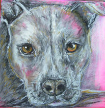 Pitbull, Staffordshire, Portrait, Terrier