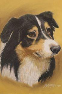 Künstlerfarbstift, Buntstiftzeichnung, Hund, Australian shepherd